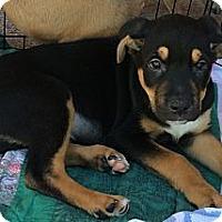 Adopt A Pet :: Wayne - Phoenix, AZ