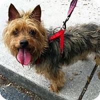 Adopt A Pet :: Eli - Spring Hill, FL