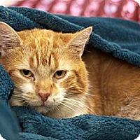 Adopt A Pet :: Rusty - london, ON