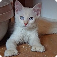 Adopt A Pet :: Huck Fin - Escondido, CA