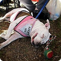 Adopt A Pet :: Sadie - Chattanooga, TN