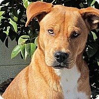 Adopt A Pet :: Sandy - Eustis, FL