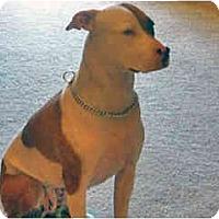 Adopt A Pet :: Zoey - Courtesy Post - Scottsdale, AZ
