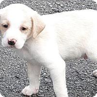 Adopt A Pet :: Jordan - Columbus, IN