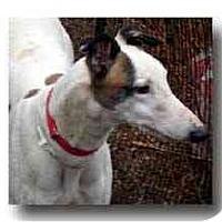 Adopt A Pet :: Schemer - Roanoke, VA