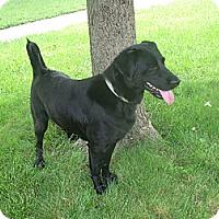 Adopt A Pet :: Tessie - Lewisville, IN