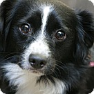 Adopt A Pet :: Chispita