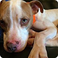 Adopt A Pet :: Richmond - Houston, TX