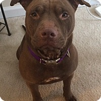 Adopt A Pet :: Chiclet - Millersville, MD