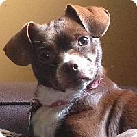 Adopt A Pet :: Elise - Marietta, GA