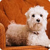 Adopt A Pet :: Bobi - Portland, OR
