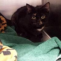 Adopt A Pet :: Maeve - Lima, OH