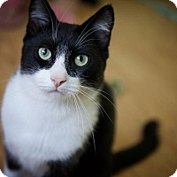 Adopt A Pet :: Bennett - Mountain View, CA