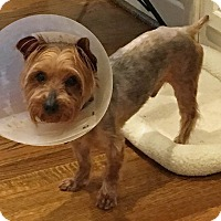 Adopt A Pet :: Colby - Atlanta, GA