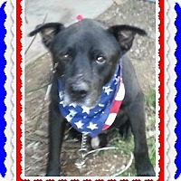 Labrador Retriever Mix Dog for adoption in Austin, Texas - Tyson