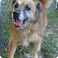 Adopt A Pet :: HARRY - Brooksville, FL