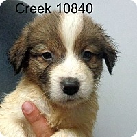 Adopt A Pet :: Creek - baltimore, MD