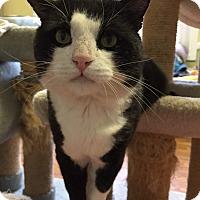 Adopt A Pet :: Roosevelt (..is in Somerville) - Somerville, MA