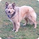 Adopt A Pet :: Tanner - ADOPTION PENDING - CONGRATS MERRITT!