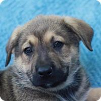 Adopt A Pet :: Jupiter - ADOPTION IN PROGRESS - Brattleboro, VT