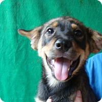 Adopt A Pet :: Fido - Oviedo, FL