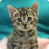 Adopt A Pet :: Maverick - Canoga Park, CA