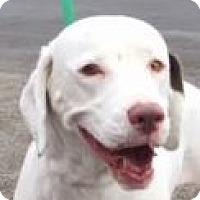 Adopt A Pet :: Chloe - Canoga Park, CA