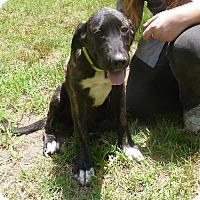 Adopt A Pet :: Vesper meet me 7/15 - Manchester, CT