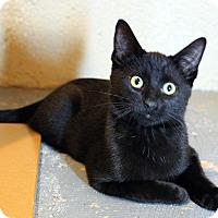 Adopt A Pet :: Fluffer Nutter Sandwich - Troy, MI