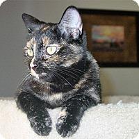Adopt A Pet :: Jazmine McJiggles - Phoenix, AZ