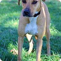 Adopt A Pet :: Max - Waldorf, MD