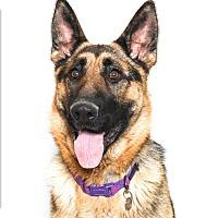 Adopt A Pet :: Sandy - San Luis Obispo, CA