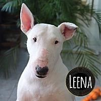 Adopt A Pet :: Leena - Lake Worth, FL