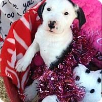 Adopt A Pet :: MISSIE-ADOPTED - Cranston, RI