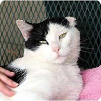 Adopt A Pet :: Gary-O - Nolensville, TN