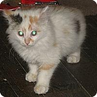 Adopt A Pet :: Chantilly - Edmond, OK