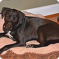 Adopt A Pet :: McCoy - Brattleboro, VT