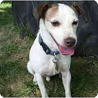 Adopt A Pet :: Otis - Omaha, NE