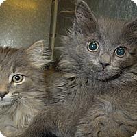 Adopt A Pet :: Sissy - Medina, OH