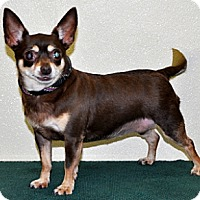 Adopt A Pet :: Coco - Port Washington, NY
