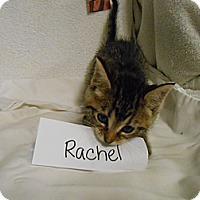 Adopt A Pet :: Rachel - Maywood, NJ