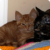 Adopt A Pet :: Thor - Nolensville, TN
