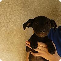 Adopt A Pet :: Jamie - Oviedo, FL