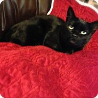 Adopt A Pet :: Valentina-URGENT - Los Angeles, CA