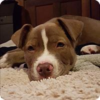 Adopt A Pet :: Jax - San Jose, CA