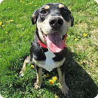 Adopt A Pet :: TRIX - New Cumberland, WV