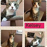 Adopt A Pet :: Kelsey - McDonough, GA