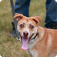 Adopt A Pet :: Bolt - Batavia, NY