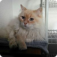 Adopt A Pet :: Rain - Kenai, AK