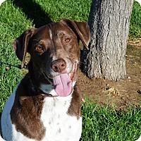 Adopt A Pet :: Hugo - Meridian, ID